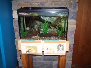 Crayfish and Snail Aquarium