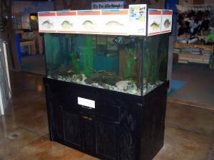 Native Fish Aquarium