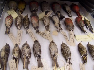 Collections - birds