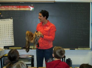 Third Grade: Wolves! Coyotes! Foxes!