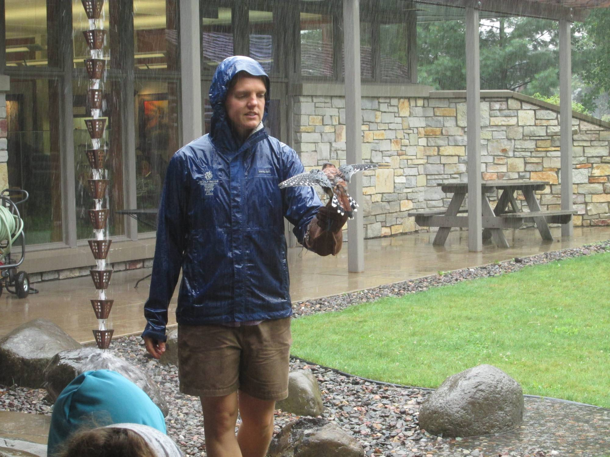 Aldo in the rain - Museum Raptor Program